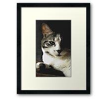 Untitled.00160 Framed Print