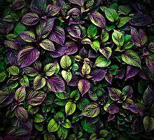 Leaf Bed by Myron Watamaniuk