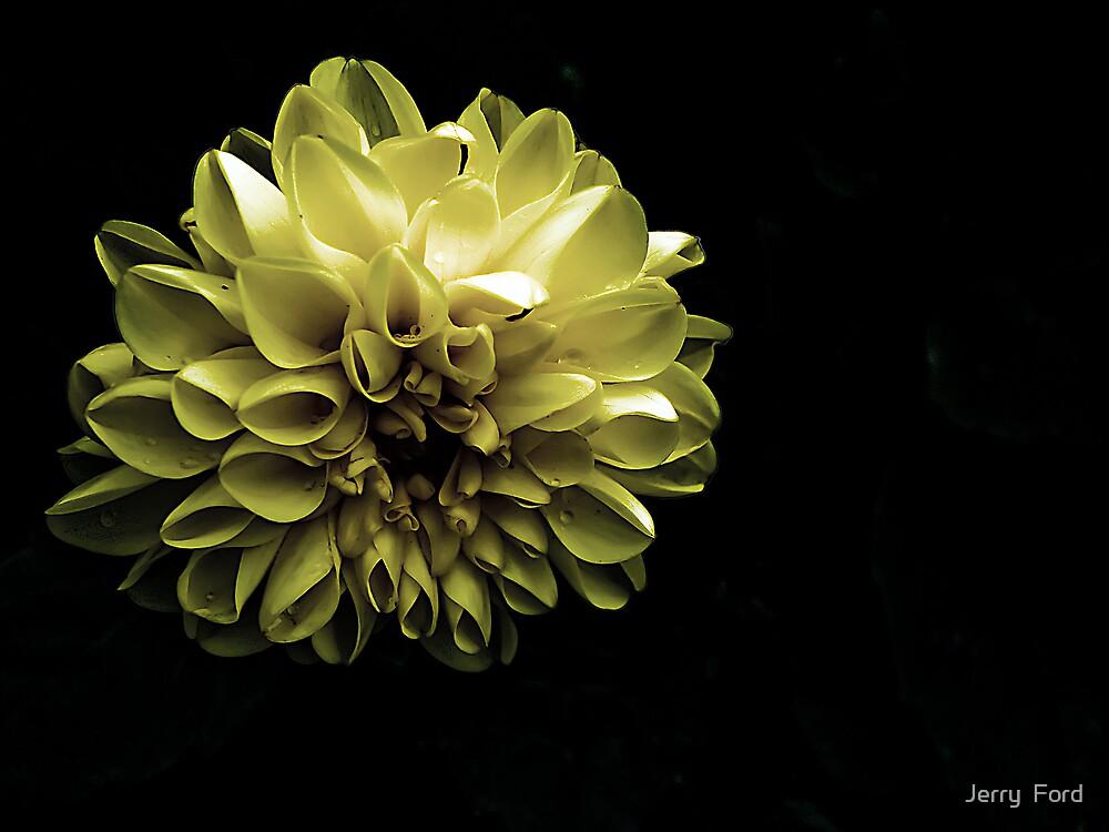 Evening Bloom by Myron Watamaniuk