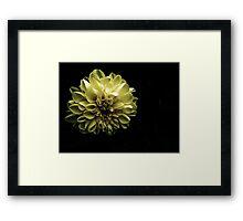 Evening Bloom Framed Print