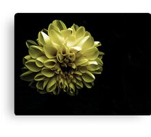 Evening Bloom Canvas Print