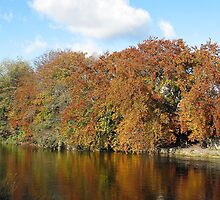 River Tweed Autumnal Colours and Blue Sky by rosie320d