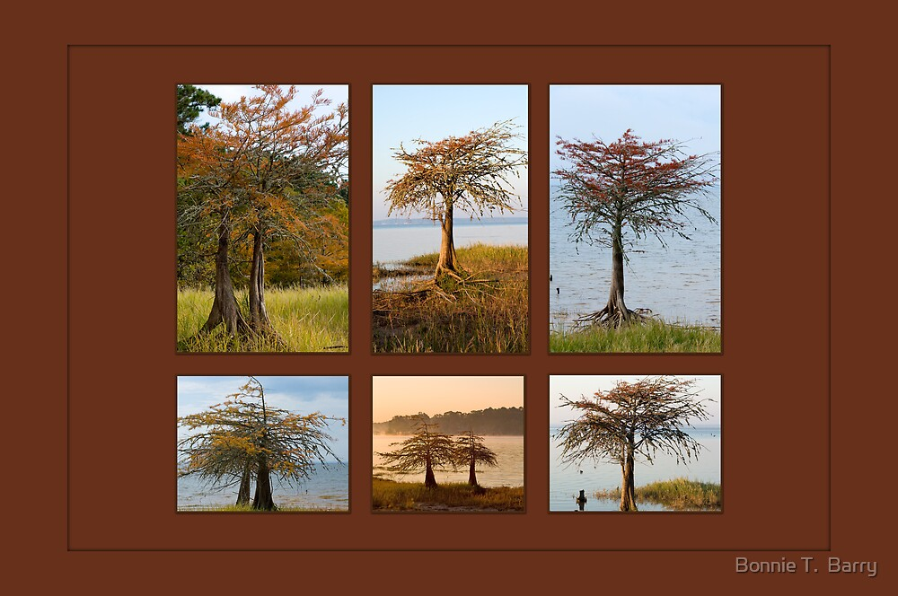 Cypress Trees in Fall by Bonnie T.  Barry