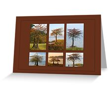 Cypress Trees in Fall Greeting Card