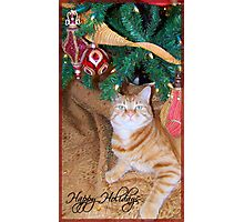 Cat's Meow Christmas! Photographic Print