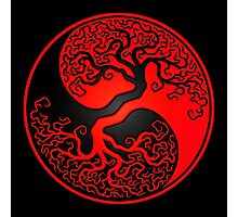 Red and Black Tree of Life Yin Yang Photographic Print