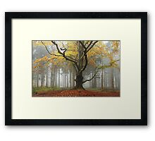 Revisiting an old friend in November Framed Print
