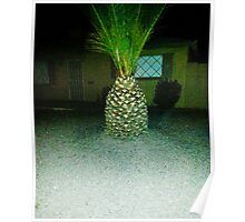 Pineapple Palm Tree!! Poster
