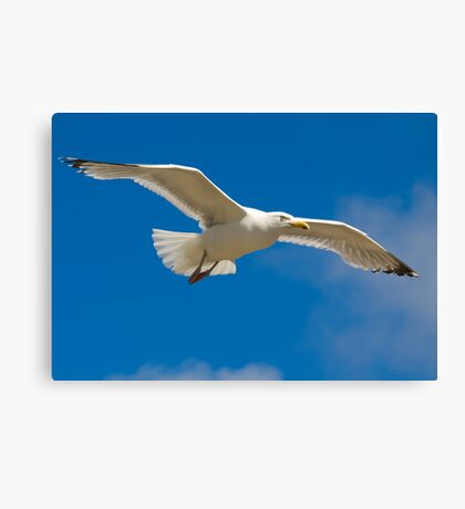 Freedom airline Canvas Print