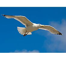 Freedom airline Photographic Print