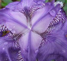 after the rain by Joy Grassman