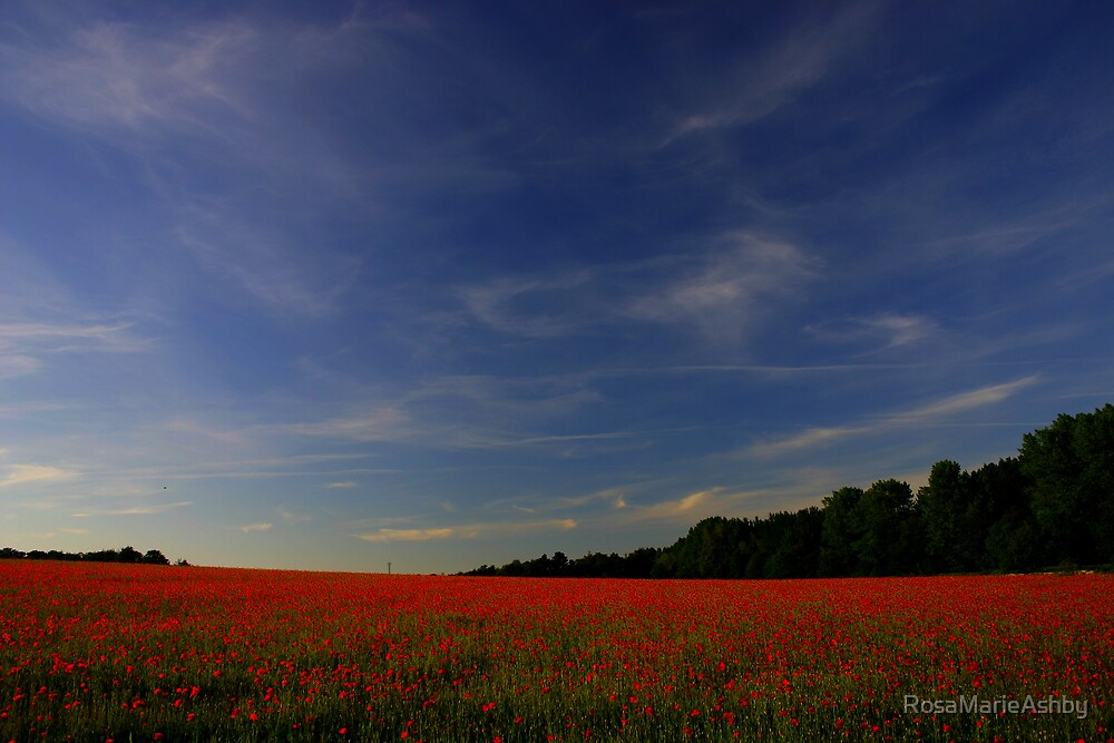 Poppy Freedom (Remembrance Day) by RosaMarieAshby