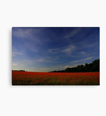Poppy Freedom (Remembrance Day) Canvas Print