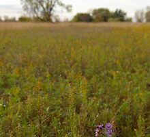 Tree, Meadow, Ironweed by rdshaw