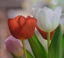 Two Tulips by walstraasart