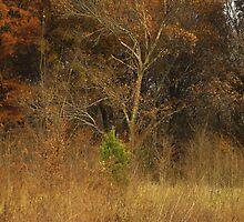 Textured Trees by WildestArt