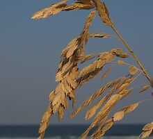 Sea Oats at Sunset, Hunting Island by Anna Lisa Yoder