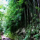 Bamboo Forest by kevin smith  skystudiohawaii