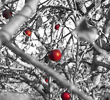 Apples by eleganceinimagery