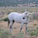 Wild Mare in Wild Flowers by Kelly Jay