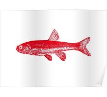 Lone Red Fish Poster