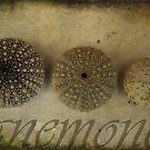Anemones by Melanie  Dooley