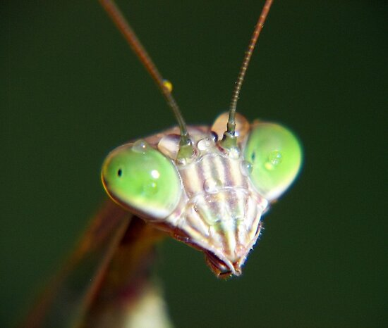 Ready For My Closeup by Gayle Dolinger
