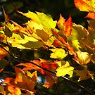 Sunny Leaves by Tammy F