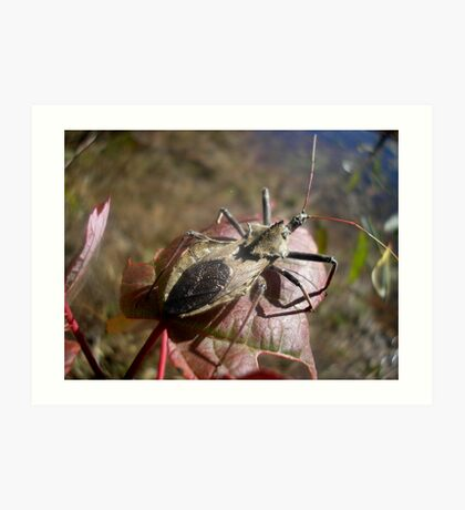 Stink Bug Art Print