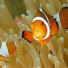 Clowns Of The Sea by MattTworkowski