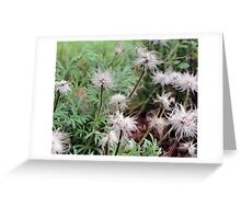 Hairy Flowers Greeting Card
