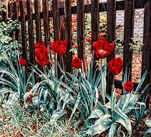 Tulips for you by Simon Duckworth