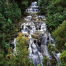 Masons Falls, Kinglake NP. by Ern Mainka
