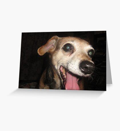 Look at this Face - I'm Irresistible! Greeting Card