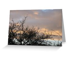 Trees and sky - the beauty of nature Greeting Card