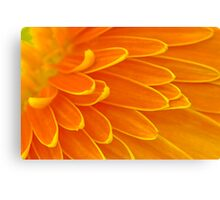 Gerbera Poems - The Divine Play of Creation Canvas Print