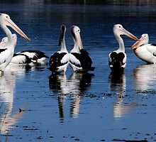 Pelicans on Lake Albert by elyglen