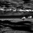Gulls by Simmone