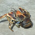 Robber Crab by Karen Stackpole