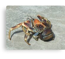 Robber Crab - Christmas Island Canvas Print