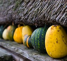 Mill Squash by Ryan Young