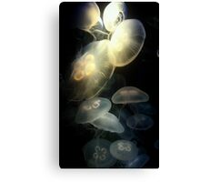 Jellyfish Darkness to Light Canvas Print
