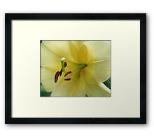 Yellow Lily Up Close Framed Print
