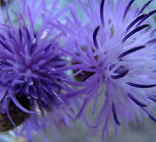 purple fusion by Jan Stead JEMproductions