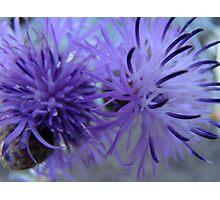 purple fusion Photographic Print
