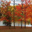 Autumn At The Pond by Molly  Kinsey
