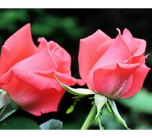 Peach Rose Duo Photographic Print