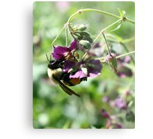 Bumble Bee With Pollen Metal Print