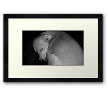 Sweet Dreams my Beautiful Puppy Framed Print