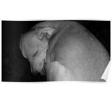 Sweet Dreams my Beautiful Puppy Poster
